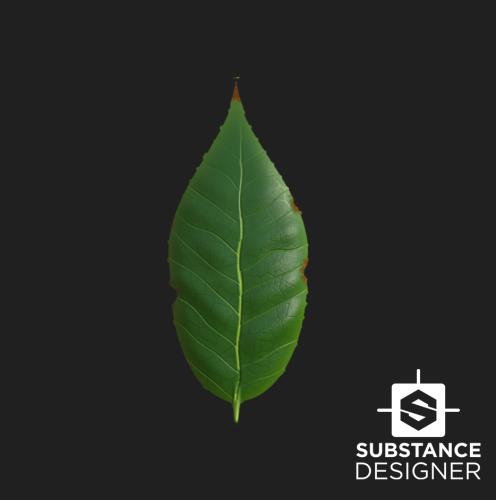 SD_Leaf